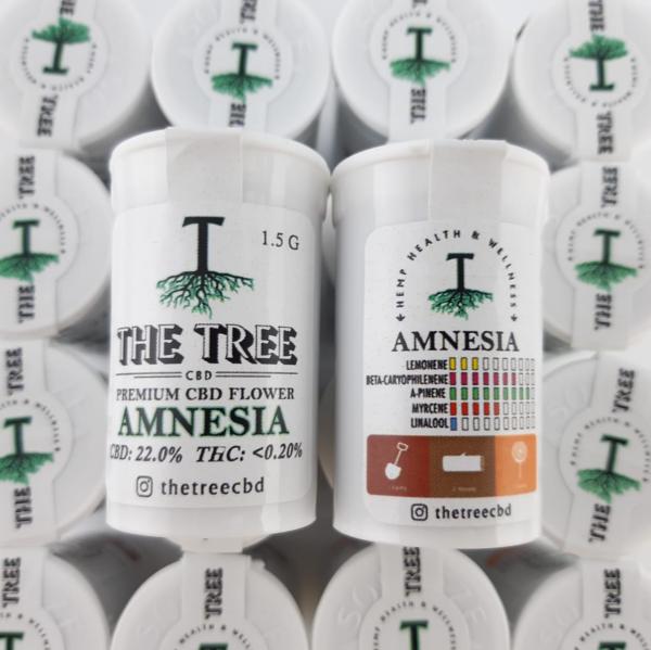 amnesia galeria-thetree