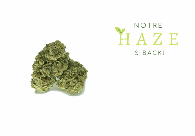 haze-french-thetreecbd