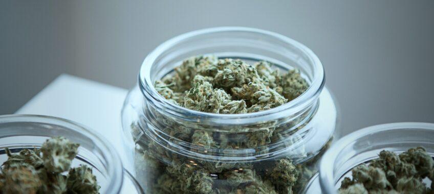 amnesia-marijuana