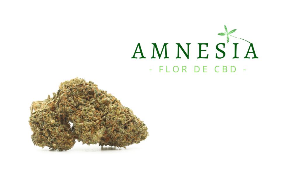 amnesia-flor-de-cbd